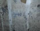 mold remediation-11