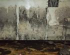 mold remediation-6